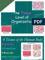 2- Body Tissues