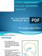 46 - Embriología y Anatomía Quirúrgica del Miembro Pélvico