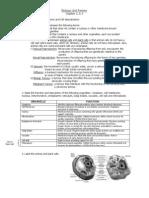 Biology Unit Review