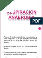 respuracion anaerobia