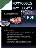 Actinomycosis Ppt Joel Ruminant