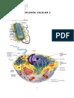 Guía N2_biología celular I