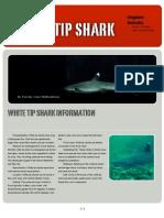 Chelsea White tip shark