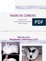 02 Razas de Conejos