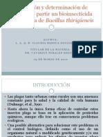 Presentacion Bacillus