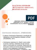 INVESTIGAÇÃO DA ATIVIDADE ANTI-ULCERA DE Centrocema viridianum L
