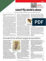 Drosophila Animals Without Oxygen