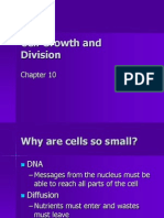 Ch 10 Mitosis