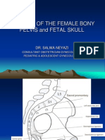 Anatomy of the Female Bony Pelvis and Fetal