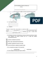 Ficha de Avaliação de Ciências da Natureza- sistema circulatório e respiratorio do peixe