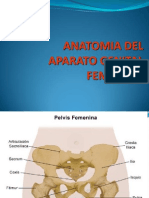 Anatomia Del Aparato Re Product Or Femenino