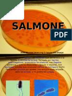 Shigella Y Salmonella