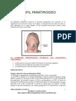 Sistema Endocrino Paratiroide