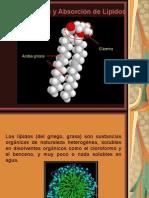 Medicina - Bioquimica Lipidos Estructura y Digestion