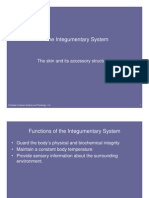 Microsoft Power Point - Integumentary System 2