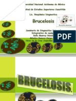 BRUCELOSIS (2)-2 (1)