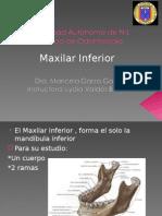 maxilar inferior2[1]