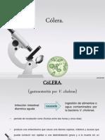 V. cholerae
