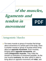 Role of the Muscles, Ligaments and Tendon