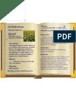girasol-colección-n5-herboristería