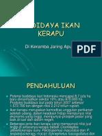 Kerapu spp