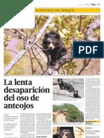 La lenta desaparición del oso de anteojos