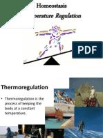 Homeostasis Temperature Regulation