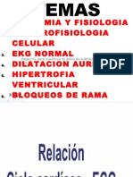anatomiaelectrofisiologia-110521133056-phpapp02[1]