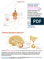 Sistema endocrino biomed