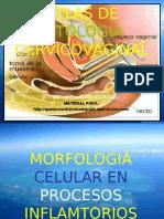 CITOLOGIA Atlas Citologia Cervicoganal