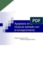 Apoptosis en el músculo estriado con el envejecimiento