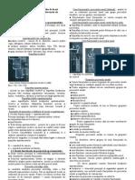 Tema 3. Bazele Organizarii Arhitecturale Ale Apartamentului