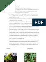 Características de las hepáticas  SAADO27 DE AGOST