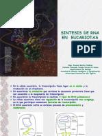 Sintesis de Rna en Eucariotas 2011