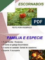 ESCORNABOIS, TRABALLO REALIZADO POR FEDERICO