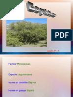 ESPIÑO DARIO