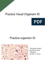 Practice Visual Organism ID Merged