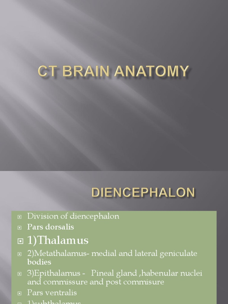 Ct Brain Anatomy Human Head And Neck Earth Life Sciences