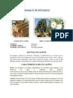 TRABAJO DE BOTANICA