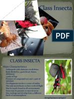 Class Insecta