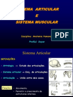 Aula Sistema Articular_muscular