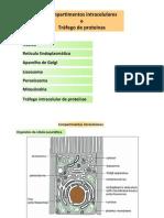 04Biol Celular_Compartimentos Intracelulares