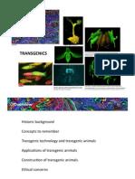 Transgenic Animals AnaNunes