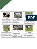 Farm Flashcards p2