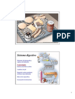 4. Digestión y Absorcion de Nutrientes