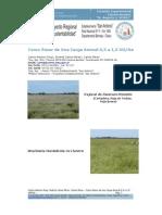 PDF Panicum Prionitis Bra Chi Aria Humidicola 06