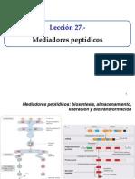 Leccion 27-Mediadores peptidicos