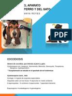 Parasitosis Del Aparato Digestivo Del Perro y Del[1]