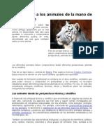 ANIMALES Y SU TIEMPO DE GESTACIóN