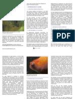 patologias oculares en peces de acuario